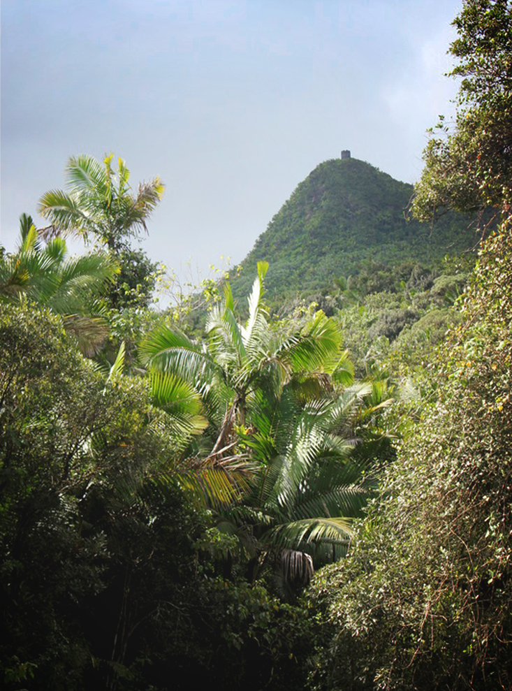 View of El Yunque rainforest peak